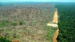 """Las selvas tropicales están en """"peligro de extinción"""" - Noticias de james cook"""