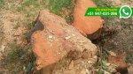 WhatsApp: ¿por qué talaron árboles en Lince? (FOTOS) - Noticias de tala de árboles