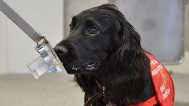 El hallazgo podría servir para entrenar mejor a los perros policías.(Foto: PA)