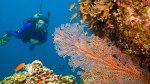 Destinos que hay que visitar antes de que cambien para siempre - Noticias de especies endémicas