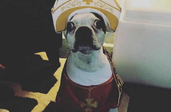 Los adorables #PopeDogs durante el tour del Papa en EE.UU.