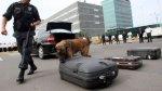 Este año cayeron 112 'burriers' en aeropuerto Jorge Chávez - Noticias de jorge saldana
