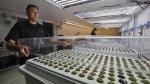 El primer centro turístico de EE.UU. para consumo de marihuana - Noticias de miembros de mesa