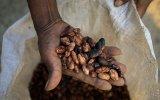 Día del cacao: 5 razones para incluirlo en nuestra dieta