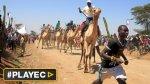 Kenia: las carreras de camellos para atraer a turistas [VIDEO] - Noticias de juegos naturales