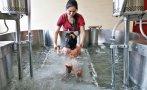 Hospital del Niño de San Borja tendrá gestión privada