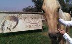 Coaching con caballos, una herramienta para ser mejor lider