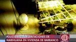 Barranco: descubren cultivos de marihuana dentro de vivienda - Noticias de huáscar
