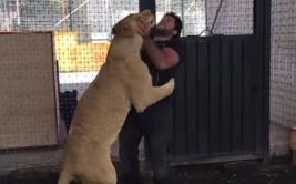 Pudo matarlo, pero leona decidió abrazar a su cuidador [VIDEO]