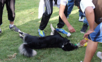 Cusco: 5 perros murieron en pleno evento en hotel de Pisac