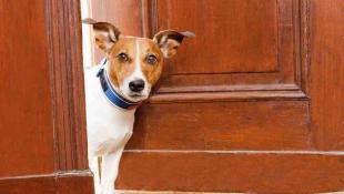 Qué hacer cuando tu perro se porta mal frente a los invitados