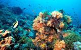 El calor del océano dañará corales en todo el mundo en 2015