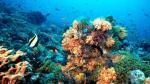 El calor del océano dañará corales en todo el mundo en 2015 - Noticias de fenómenos atmosféricos