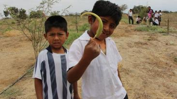 Reforestación en Olmos: entusiastas escolares ayudaron [FOTOS]