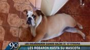 Jesús María: salían de veterinaria y les robaron a su mascota