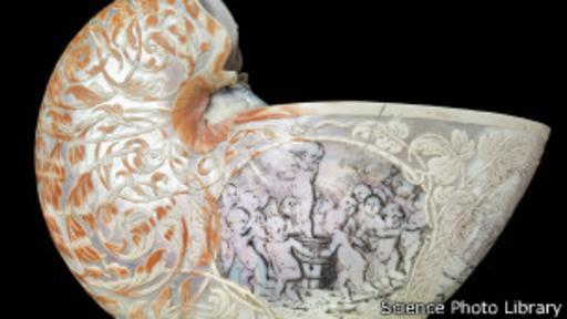 Una nautilina de la colección de Sir Hans Sloane. (Foto: Science Photo Library)
