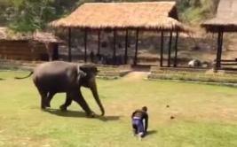 Elefante defiende a su cuidador tras verlo en peligro [VIDEO]