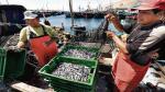 Produce publica norma para ordenamiento pesquero de anchoveta - Noticias de pesca de anchoveta