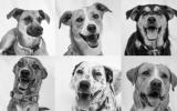 Wuf: adopta al perro rescatado perfecto para ti en esta página