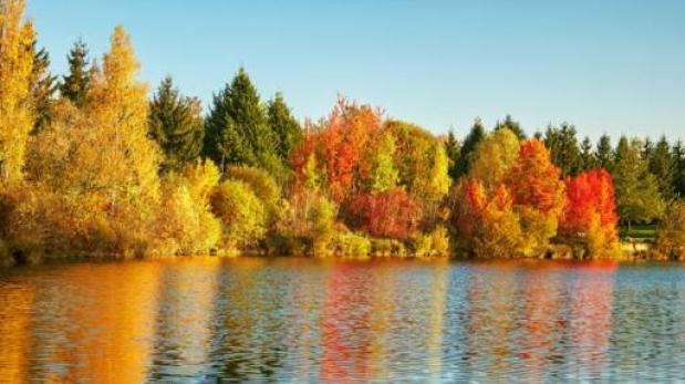 Por qu las hojas de los rboles cambian de color en for Porque hay arboles de hoja perenne
