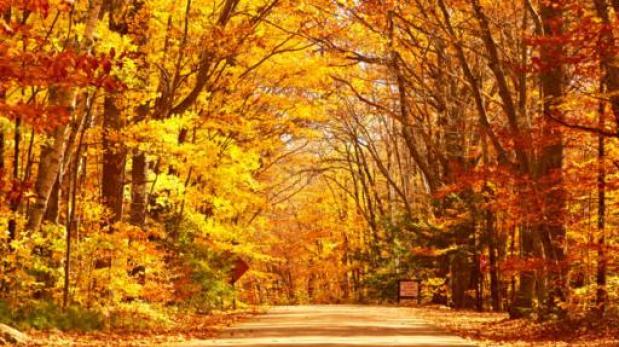 Por qu las hojas de los rboles cambian de color en for Arboles que no pierden sus hojas en otono