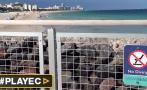 Migración de tiburones causa alarma en playas de Miami [VIDEO]