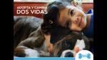 Wuf y la adopción de mascotas en la era digital - Noticias de perro maltratado