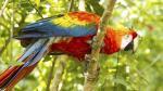 Tingana: descubre el paraíso amazónico junto a Moyobamba - Noticias de monte orquideas