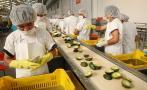 Ventas de Camposol se elevaron cerca de 20% en tercer trimestre