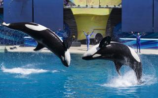 SeaWorld pondrá fin a sus espectáculos con orcas en California