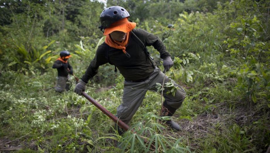 Erradicadores de coca: un duro trabajo en la selva [FOTOS]