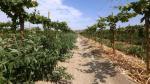 Inversión en proyecto Olmos supera los S/.600 mlls. en un año - Noticias de alfonso pinillos