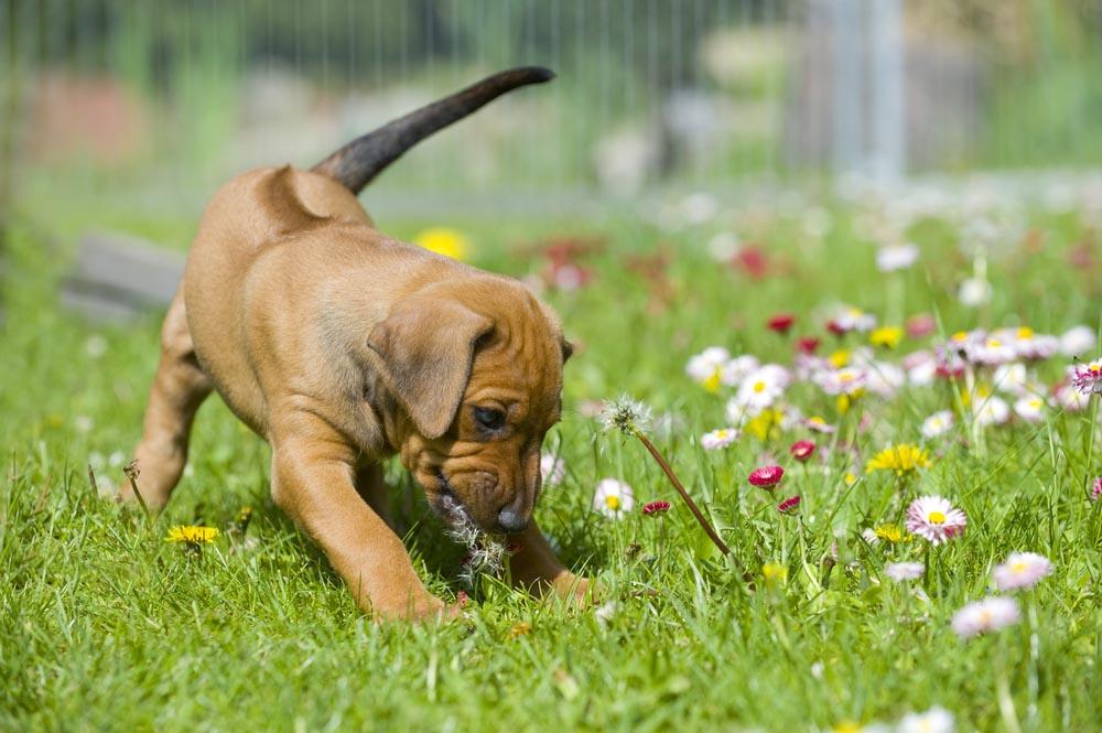 [Foto] ¿Por qué tu perro tiene el hábito de escarbar el jardín?