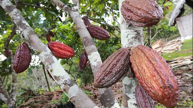 United Cacao planea producir 10.000 toneladas en Perú al 2021
