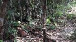 Saweto: alambrado impide tránsito de nativos [FOTOS] - Noticias de policía nacional del perú