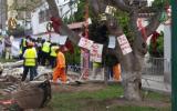 """""""El valor de los árboles en Lima"""", por Angus Laurie"""