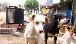 Estos 58 perros buscan nuevo hogar tras muerte de su cuidadora