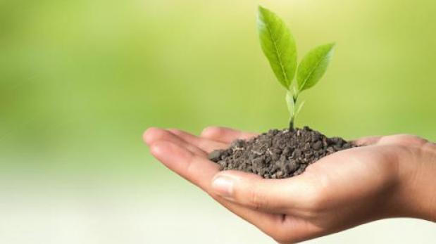 Las plantas son inteligentes aqu la respuesta planeta - Cosas sobre las plantas ...