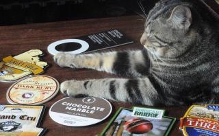 Bag o´Nails, el bar de gatos que se ganó el corazón británico