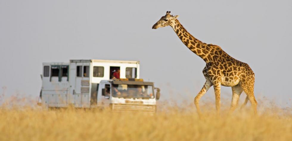 Todo lo que debes saber para viajar a África