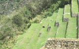 Oso de anteojos sorprende a turistas en Machu Picchu [VIDEO]
