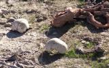 Iraq: Hallan 3 nuevas fosas comunes en zona que perteneció a EI