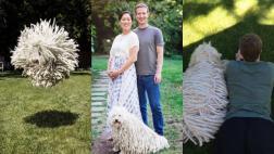 El perro de Zuckerberg es sensación por su curioso aspecto