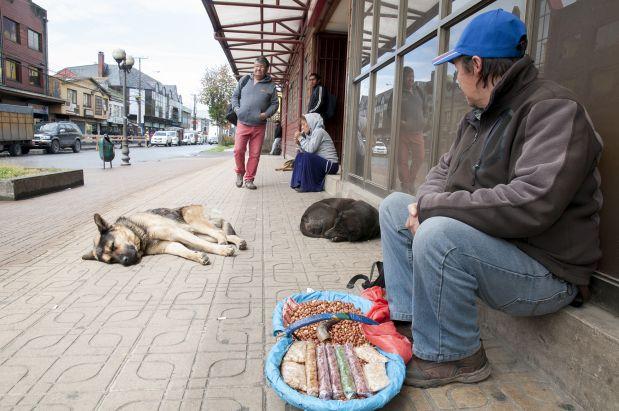 [Foto] Para estos perros el desamparo no es mayor problema