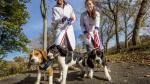 Estos son los primeros perros gestados por fecundación in vitro - Noticias de alex cornell