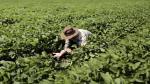 Mano dura de Trump contra inmigrantes preocupa a agricultores - Noticias de crisis