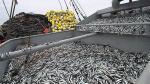 SNP espera cuota de anchoveta mayor a 1,8 millones de toneladas - Noticias de virú mar
