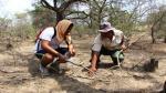 Lambayeque: universitarios reforestan el Bosque de Pómac - Noticias de cultura lambayeque
