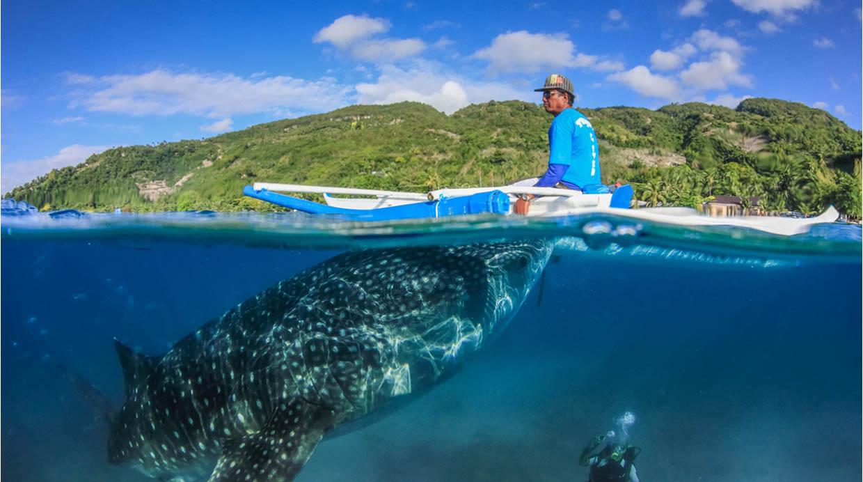 Oslob, Cebu. Este es el lugar ideal para nadar con tiburones ballena. Aunque no está permitido tocarlas, pasan tan cerca de ti que podrás sentir sus aletas. (Foto: Shutterstock)