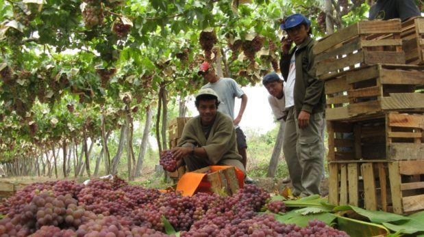 INEI: Producción de uva en el Perú creció en más de 50%